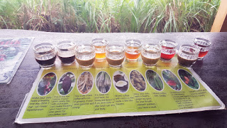 Tea tasting, Coffee farm, Bali, Indonesia