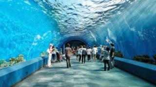 Underwater world, Pattaya, Thailand