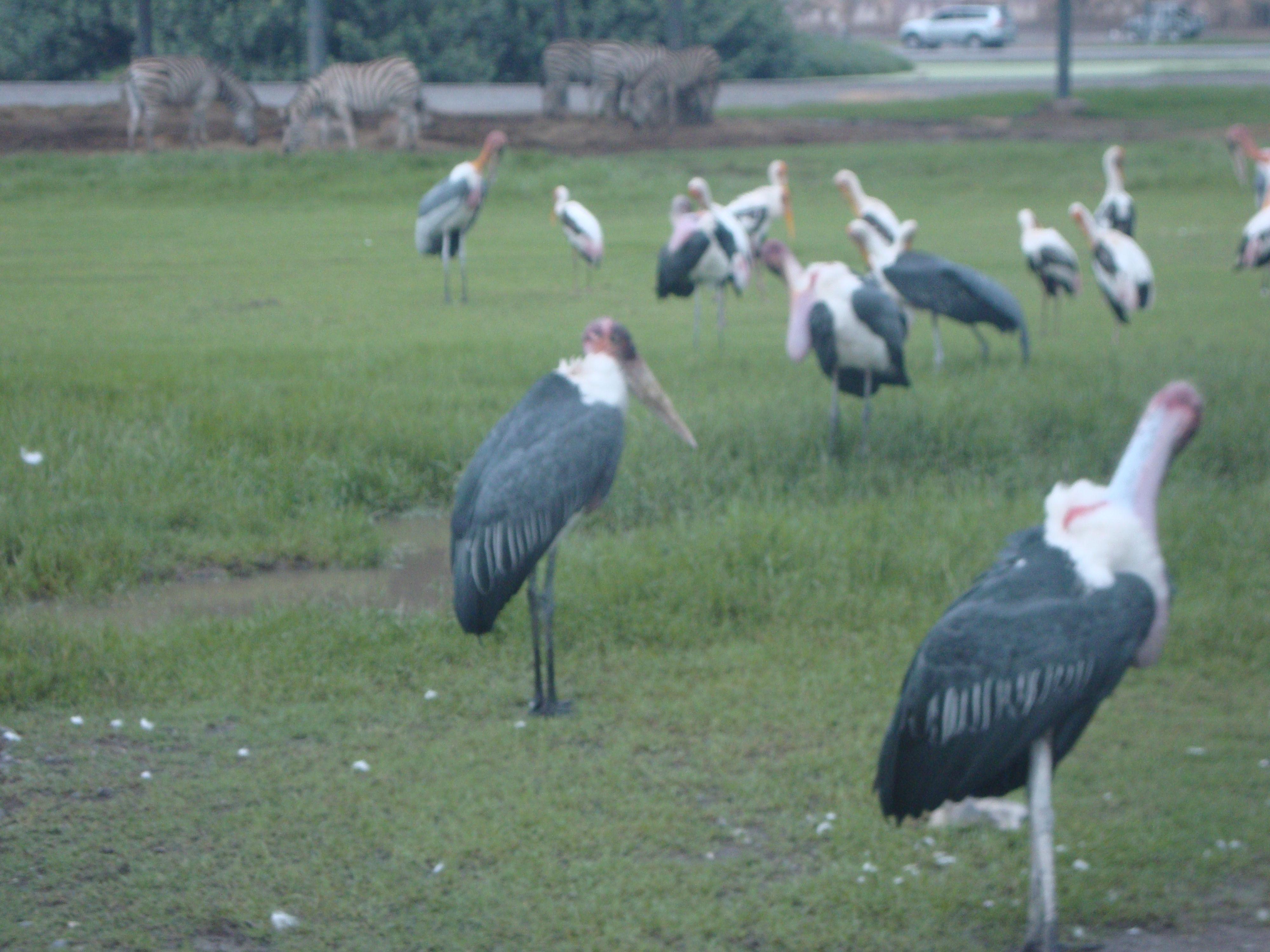 Birds, Safari Park, Bangkok, Thailand