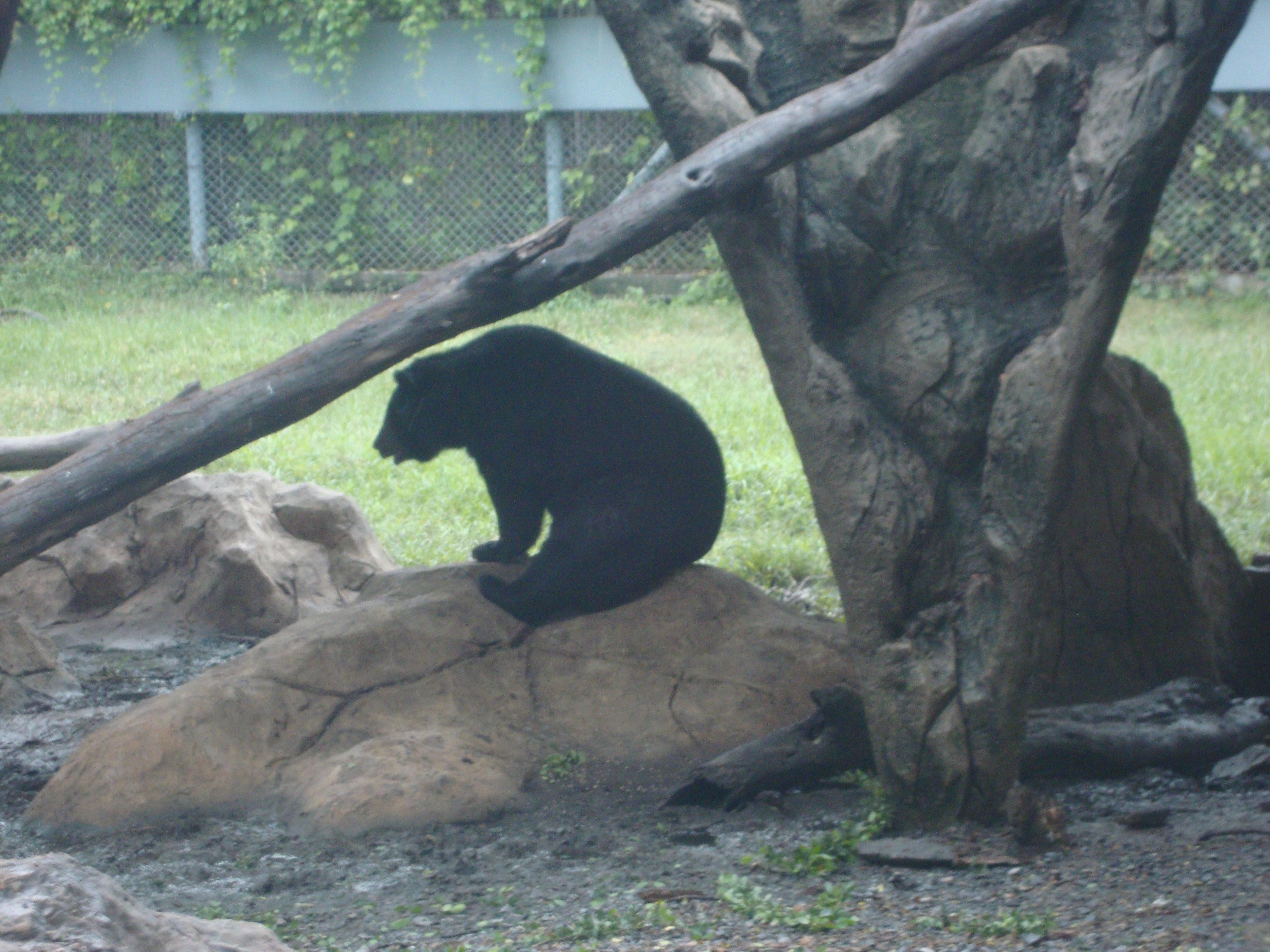 Bear, Safari Park, Bangkok, Thailand